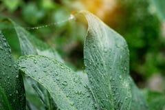 Падения на листьях после дождя Стоковые Фото