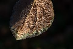 Падения на листьях стоковые фотографии rf