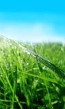 падения росы засевают вода травой Стоковые Фото