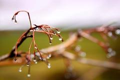 Падения росы на зоре стоковое фото