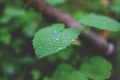 Падения росы на листе Стоковое фото RF