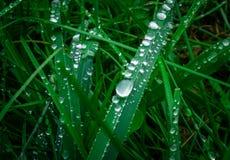 падения росы на траве стоковые изображения rf