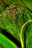 Падения росы стоковое фото rf