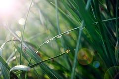 Падения росы стоковое фото