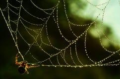 Падения сети паука зеленые стоковые изображения rf
