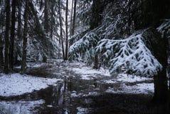 Падения снега в лес с деревьями Интенсивный снег немедленно покрывает поверхность ветвей леса и дерева со слоем sno стоковое изображение rf