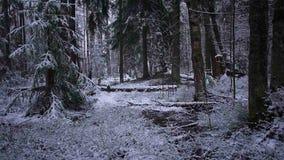 Падения снега в лес с деревьями Интенсивный снег немедленно покрывает поверхность ветвей леса и дерева видеоматериал