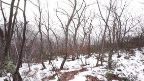 Падения снега на дремлющие деревья в Catskills сток-видео