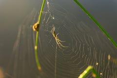 Падения утра росы в сети паука Паутина в падениях росы Красивые цвета в природе макроса стоковые фото