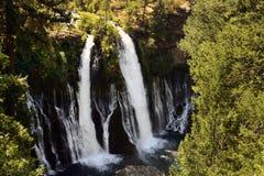Падения Burney расположенные в парке штата Mcarthur Burney, Burney, Калифорния стоковые изображения rf