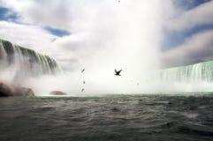 падения niagara птиц Стоковое фото RF
