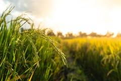 Пади в поле стоковое фото rf