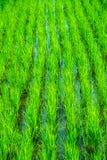 Пади в поле стоковая фотография rf