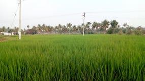 Пади поля деревни стоковое фото rf