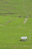 пади поля зеленый Стоковое Фото