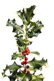падуб ветви ягод Стоковое Изображение RF