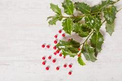 Падуб и красные ягоды Стоковые Изображения