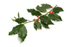 падуб рождества ветви Стоковые Фотографии RF