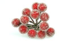 падуб ягод Стоковые Фотографии RF