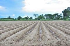 Паз почвы текстуры в поле Стоковая Фотография RF