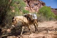пакеты нося лошади Стоковое Изображение RF