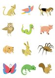 Пакет 5 животных Стоковые Фотографии RF