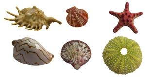 Пакет коллажа Seashell Стоковое Фото