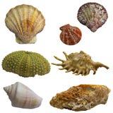 Пакет коллажа Seashell Стоковые Изображения RF