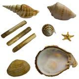 Пакет коллажа Seashell Стоковая Фотография