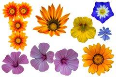 Пакет нескольких цветков стоковые фотографии rf