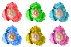 Пакет покрашенного экзотического нежного изолированного тюльпана цветет макрос Стоковое Изображение RF