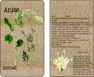 Пакет семени анисовки винтажный Стоковые Изображения RF