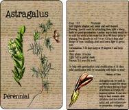 Пакет семени астрагала винтажный Стоковое фото RF