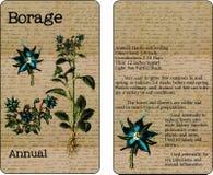 Пакет семени Borage винтажный Иллюстрация вектора
