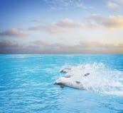 Пакет скача дельфинов стоковые фото