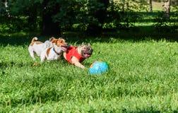 Пакет 3 собак играя с шариком на лужайке парка стоковые фотографии rf
