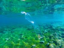 Пакет целлофана с морской водорослью Фото пластиковой погани подводное Тропическое загрязнение экосистемы моря в Азии Проблема эк стоковая фотография rf