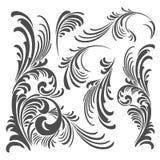 Пакет элементов флористического орнамента вектора Стоковое Изображение