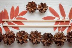 Паковать: комплект китайских ручек, ветвей зола горы и конусов леса Стоковое фото RF