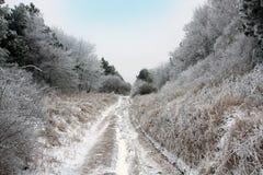 Пакостная дорога в пуще зимы Стоковая Фотография RF