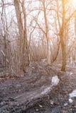 Пакостная дорога осени в дезертированном лесе Стоковые Фотографии RF