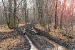 Пакостная дорога осени в лесе Стоковая Фотография RF