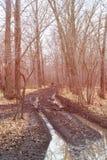 Пакостная дорога осени в лесе Стоковое Фото