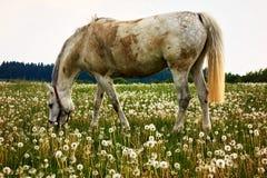 пакостная лошадь Стоковые Изображения