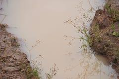 Пакостная лужица Стоковое Изображение RF