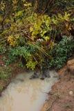 Пакостная лужица Стоковые Фотографии RF