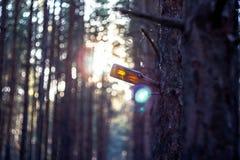 Пакостная смертная казнь через повешение пивной бутылки на ветви дерева Стоковое Изображение
