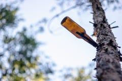 Пакостная смертная казнь через повешение пивной бутылки на ветви дерева Стоковое фото RF