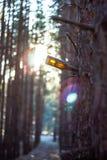 Пакостная смертная казнь через повешение пивной бутылки на ветви дерева Стоковая Фотография