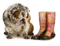 Пакостная собака Стоковое Изображение